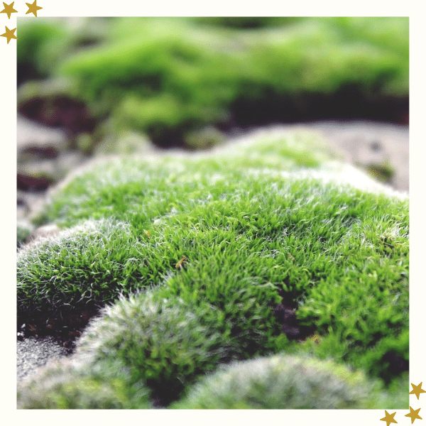 Ground Moss On Rocks