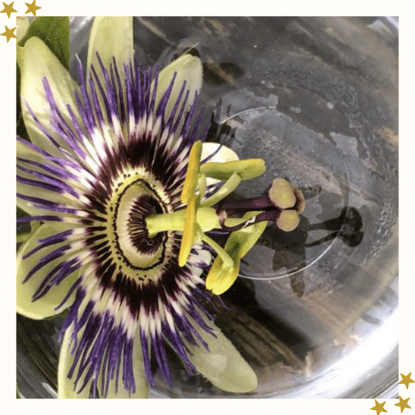 Close Up of a Passion Flower
